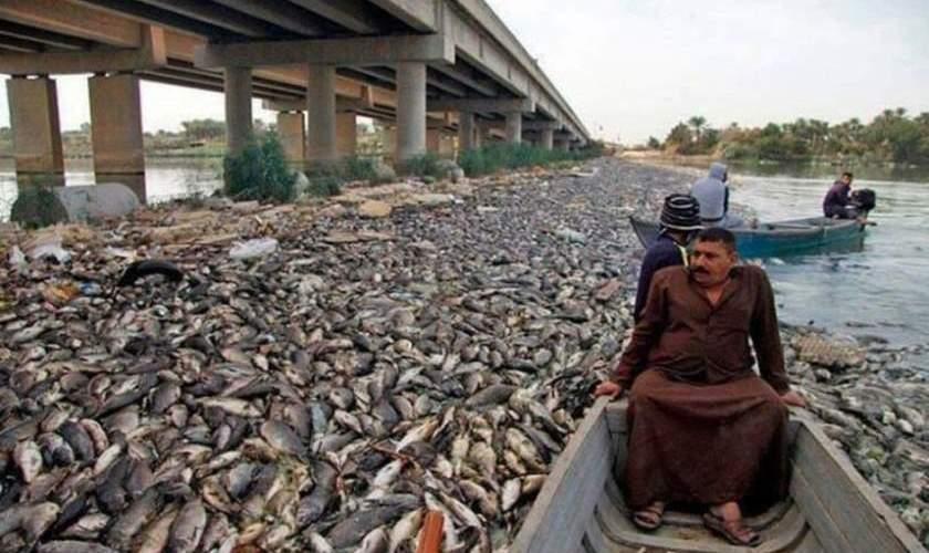 Irak'ta Binlerce Ton Balık Telef Oldu